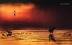 PUESTA DE SOL (pekenaza) Tags: sunset orange lake reflection water birds sunrise canon contraluz landscape spain agua waves atmosphere paisaje lagoon andalucia ave reflejo naranja malaga atmosfera backlighting ondas fuentedepiedra backllights