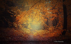 Autumn and the Spiritual Journey (ElisSerenity) Tags: nature forest tees
