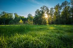 Sunset on the Tall Grass (ErikFromCanada) Tags: trees light sunset summer cloud sun ontario canada beautiful beauty evening colorful country wideangle serene colourful setting ultrawide sunbeams settingsun sunstar a7r