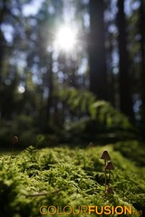 Light also for the small (Colourfusion.net) Tags: light sun fern green mushroom outside moss bright small dosh matthiasgeffert