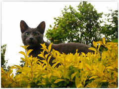 Yoda (ilaro01) Tags: trees portrait pet mist plant cold nature animal yellow fog cat grey spring eyes frame vignette gree