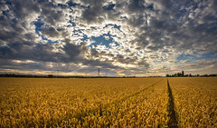 Scattered Clouds (Rob Pitt) Tags: sunset field clouds little edited fisheye crop sutton lightroom ledsham ellesmereport