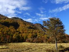 Cuesta La Fusta (Mono Andes) Tags: chile autumn bosque andes otoo chilecentral regindelaaraucana cuestalafusta