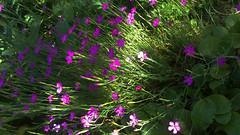 91 (jurinkof) Tags: fleurs blten   kvety kvty