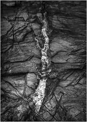 Calcite vein, Port Erin, Isle of Man (Pitheadgear) Tags: blackandwhite bw nature monochrome landscape mono rocks naturalhistory minerals vein geology isleofman calcite porterin mineralvein
