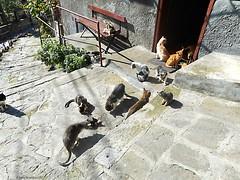 vita da gatti (Elena Scortecci) Tags: cat kitten bulgaria stray gatto micio velikotarnovo randagi