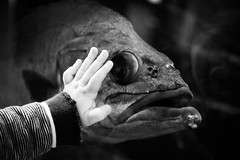 Fish (Sebastian Schmeinck) Tags: black white schwarz weiss fisch fish baby sweet nice beautiful art highlight hand finger view top perfect first time curious pry emotion shot perspective artistic canon eos award wow greatshot