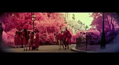 Brighton pavilion gardens (dogtemple) Tags: brighton widescreen graduation infrared pavilion aero anamorphic brightonpavilion paviliongardens colourinfrared fullspectrum anamorphicwidescreen aerochrome brightonstreet