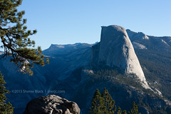 Portraits of Yosemite (sherjc) Tags: fall nature forest outdoors branches yosemitenationalpark sidelight washburnpoint