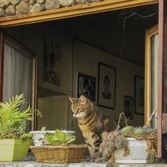 La finestra - The window (Marco Ottaviani on/off) Tags: france window cat canon room images finestra provence francia gatto provenza stanza immagini tallard marcoottaviani