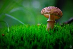 A mushroom (mostodol) Tags: wood macro nature mushroom wow fuji fujifilm champignon bois raynox xa1 bonnette greatesphotographers