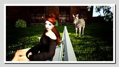 Zebracorn (Shylah Oceanlane) Tags: zebracorn slsecondlifesecondlifeavatar