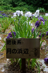 -608 (Mio:D) Tags: iris flower  ise