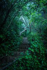 20160525-DSC_3540 (isabelle.kirsch) Tags: viet nam langbian dalat trail forest cloud fog