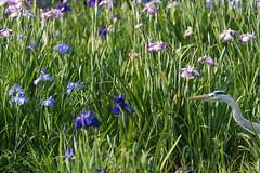 12Yamada Pond Park (anglo10) Tags: flower japan