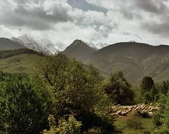Fagaras Mountains, Brasov County (bill bold II) Tags: 120 mediumformat romania 6x7 expiredfilm fujivelvia50 105mm fagaras homedeveloped pentax67ii brasovcounty fujixpressc41
