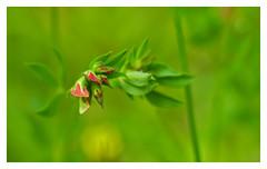 becoming yellow (e27182818284) Tags: flower blume schwarzwald blackforest smcpk55mmf18