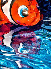 Day 176/366 Nemo (Tewmom) Tags: 366the2016edition 3662016 day176366 24jun16 nemo pool float reflections