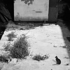 CuriousCat (lucasangarola) Tags: curious interesting shadows shadow blackcat bw blackandwhite cat wild nature mysterious observation attentive attention