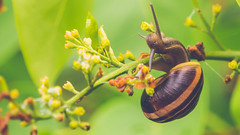 Snail climbing a flower stem (Down_BSC) Tags: flowers summer green up colorful close snail