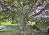 Grey Towers (johnandmary.F) Tags: tree hugetree greytowers milfordpa