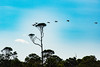 Hilton Head 2016 (354 of 192).jpg (Rhinodad) Tags: birds hiltonhead 2016 disneyshiltonheadresort dvc disney
