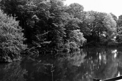 Crawley05_20160611 (Animalcito) Tags: delta 11 100 ricoh crawley xtol rikenon kr10x 3570mm3445