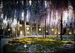 Wisteria Flowered Patio (irecyclart) Tags: urban france garden patio wisteria