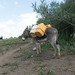 Getting water by donkey