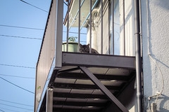 Today's Cat@2013-05-08 (masatsu) Tags: cat canon catspotting thebiggestgroupwithonlycats powershots95