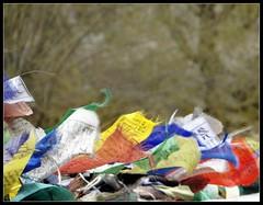 Prayer flags fluttering in the breeze (Indianature25) Tags: india mountains buddhism april prayerflags leh himalayas jk ladakh juley 2013 indianature julley ladakhaprilmay