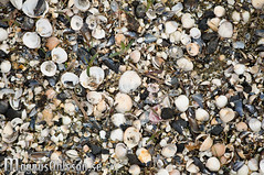 Shells-mix (sirpe2009) Tags: sea beach shell halland falkenberg ringsegrd