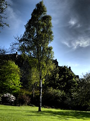 Princes St Gardens (Diamond Geyser) Tags: tree castle grass edinburgh princesstreetgardens