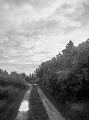 road to Jamie's, after the rain, Monhegan, FujifilmX10, 6.17.13 (steve aimone) Tags: road sky blackandwhite monochrome rain clouds landscape puddle maine monochromatic dirtroad monhegan roadway midcoast fujifilmx10 fujix10