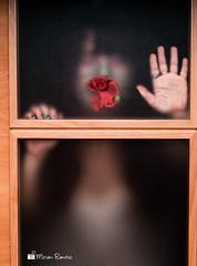 """11-52 """"Mistery II """" (Ymim) Tags: portrait selfportrait rojo autoretrato manos cuerpo proyecto clavel flickraward 52semanas"""