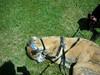 GreatBrookFarmMay92010022-1