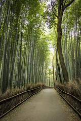 Arashiyama bamboo path (jayco1983) Tags: japan kyoto bamboo arashiyama