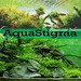 AquaStigma Aquascape Indonesia