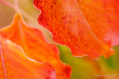 The Color of Fall (PamLink) Tags: park red orange tree green leaves fallcolor droh dailyrayofhope dailyrayofhope2013
