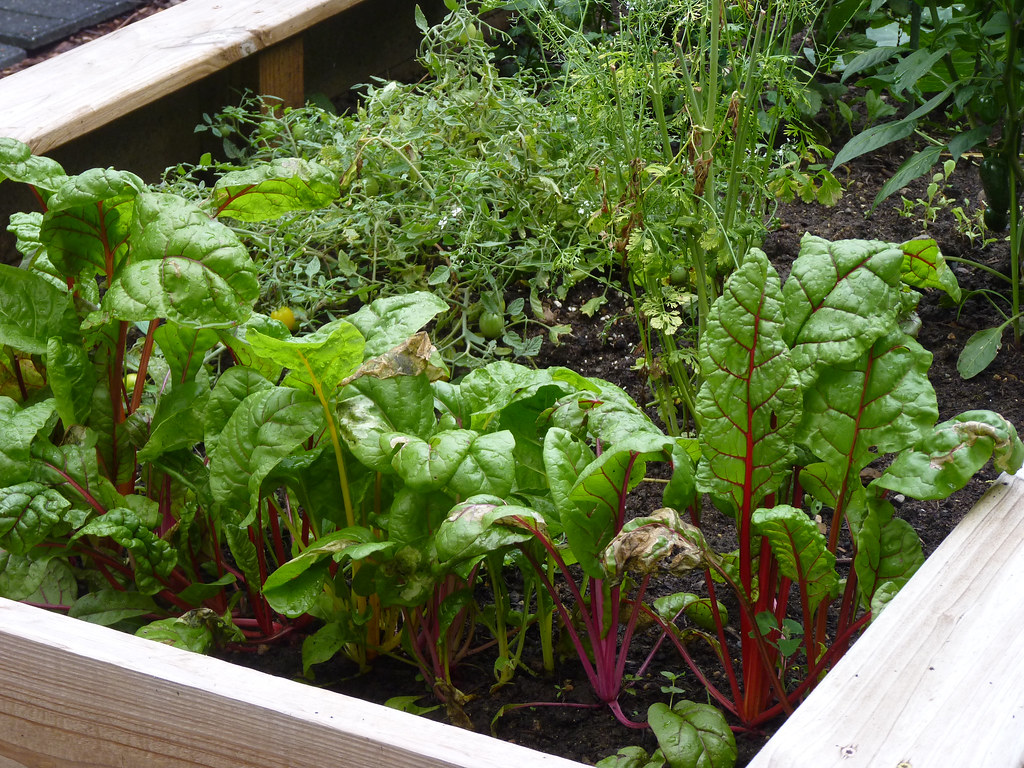raised bed vegetable garden by normanack, on Flickr