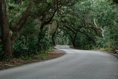 canopy road (laughlinc) Tags: canopy curves florida fortclinchstatepark green laughlinc lightroom lightroom5 nature nikon1755mm24 nikond80 road spanishmoss tree trees winding windingroad thechallengefactory nikon