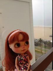 Verne looking wistfully at the ocean