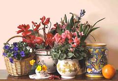 Fiori d'inverno e fiori di primavera (Melisenda2010) Tags: stilllife flora fiori naturamorta coth coth5