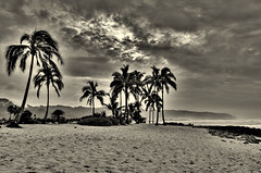 North Shore (Joseph Plotz Photography) Tags: ocean park travel trees sunset vacation sky blackandwhite bw beach sepia clouds palms landscape hawaii coast sand paradise cloudy oahu palm palmtrees northshore tropical haleiwa hdr vision:mountain=0573 vision:clouds=0666 vision:outdoor=0888 vision:sky=0705