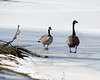 Frozen Pond (MVMoorePhotography) Tags: cold ice birds pond delaware newark autofocus beckspond ringexcellence dblringexcellence