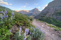 thy eternal summer shall not fade (Nola Nate) Tags: sky mountains nature landscape montana path trail wildflowers glaciernationalpark siyehpass ibeauty baringcreekvalley