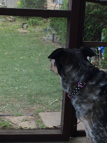 I wanna go bark at the neighbor dogs!