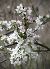 (katunchik) Tags: nature natur bulgaria priroda bulgarie  bulgarien bulharsko primorsko