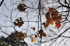 not autumn (christiaan_25)