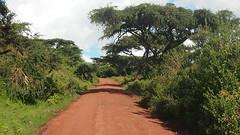 ROAD TO NGORO NGORO